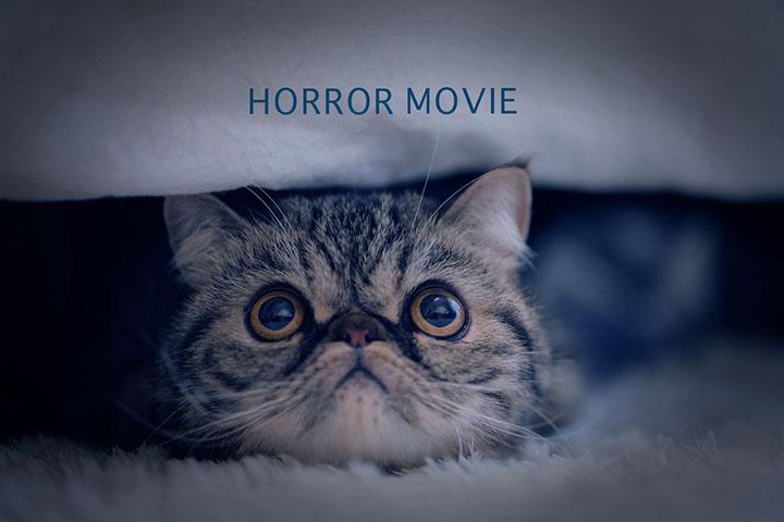 ホラー映画を見る猫