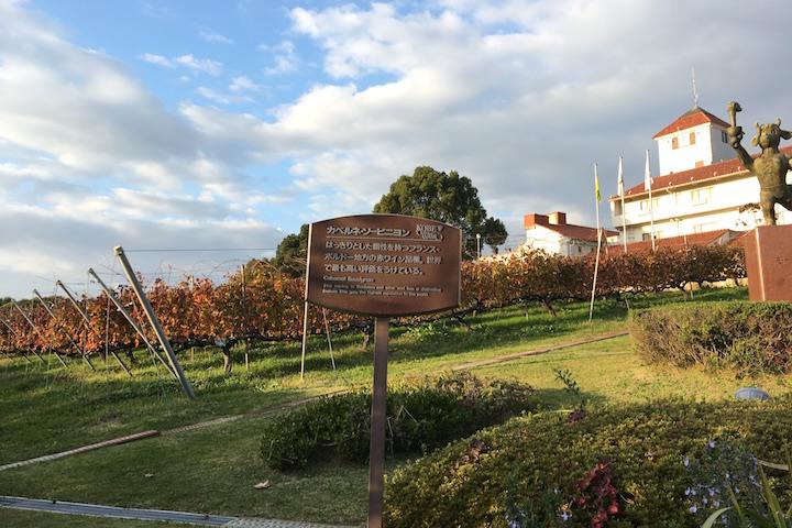 神戸ワイナリー農業公園 ぶどう畑